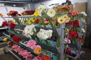 flowers at farm1 300x200 A Day At The Flower Farm