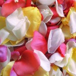 Assorted Rose Petals