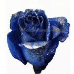 blue glitter rose 150x150 Be My Valentine Flower
