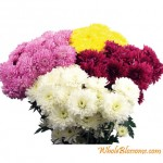 cushion poms 150x150 Wholesale Flowers All Year Round