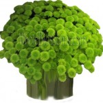 Green Button Poms Flower - Yoko Onos