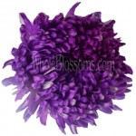 Jumbo Football Mum Tinted Purple Flower