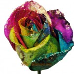 rainbow glitter rose 150x150 Be My Valentine Flower