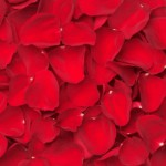 red rose petals 150x150 Be My Valentine Flower