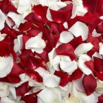 red white rose petals1 150x150 Be My Valentine Flower