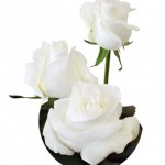 white roses 150x150 Flowers For A Valentine Wedding