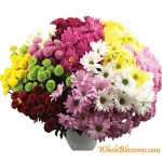 wholesale chrysanthemums flowers 150x150 Wholesale Flowers All Year Round