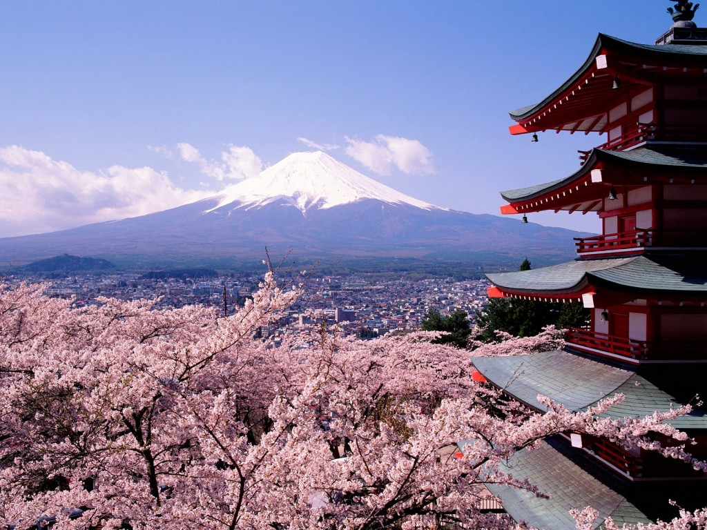 Fuji Japan   Cherry Blossoms and Mount 1024x768 Wholesale Cherry Blossoms