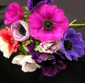 anemone flower 300x291 anemone flower