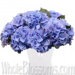 blue hydrangea dutch 150x150 WHOLESALE FLOWERS AND COLORS