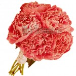 coral peonies wedding flower 150x150 CARING FOR YOUR PEONIES