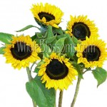 mini sunflowers 150x150 Using Sunflowers For Wedding Decorations