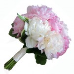 peony flowers wedding bouquet 150x150 CARING FOR YOUR PEONIES