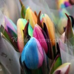 rainbow tulips 150x150 WHOLESALE FLOWERS AND COLORS
