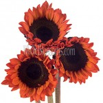 red sunflowers tinted 150x150 Using Sunflowers For Wedding Decorations
