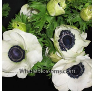 white anemone flower 300x291 white anemone flower