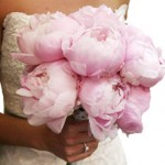 wholesale peony flowers 150x150 CARING FOR YOUR PEONIES