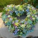 Succulents Arrangements
