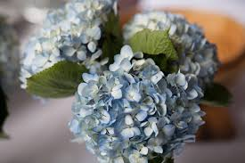 HB My Top 7 List of Hydrangeas for any Wedding