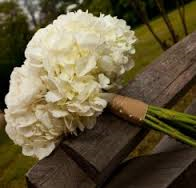 HW My Top 7 List of Hydrangeas for any Wedding