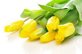 T - Yellow
