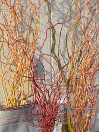 Branches - Title