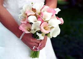 Calla Lilies - Wedding