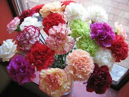 Carnations - 1