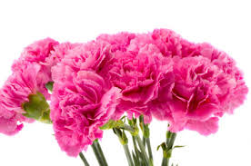 Carnations - 3