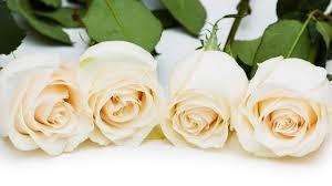 Roses - White
