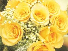 Roses - Yellow