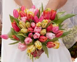Tulips - Wedding