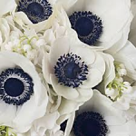 Anemones 150x150 Choosing the Right Flower during the fall