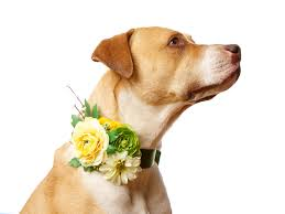 Dog 1 How To Include Your Pet in Your Floral Details