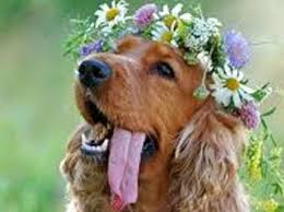 Dog 5 How To Include Your Pet in Your Floral Details