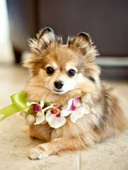 Dog 6 How To Include Your Pet in Your Floral Details
