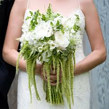 Ama Wedding What Do You Know About Amaranthus?