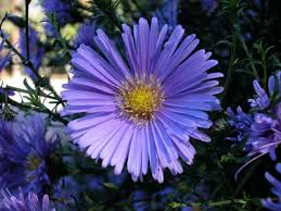 Aster Title What Do You Know Aster?