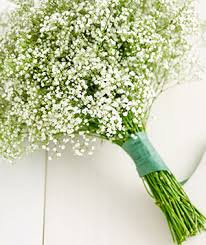 BB Wedding What do You Know about Baby's Breath?