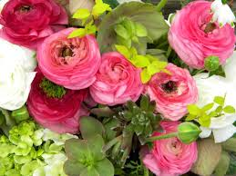 Ran 5 What Do You Know About Ranunculus?