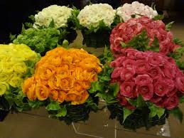 Ran 6 What Do You Know About Ranunculus?