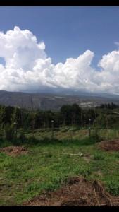 Farm - Ecuador 2