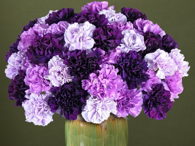 Heavenly Carnations