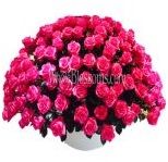 hot_pink_wholesale_roses_4