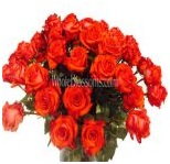 orange_wholesale_roses_7