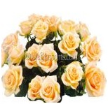 peach_wholesale_roses_8