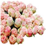 pink_wholesale_roses_3