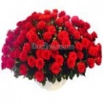 red_wholesale_roses_1