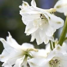 Types of white flower decide your choice floral trends diy types of white flower delphiniums mightylinksfo