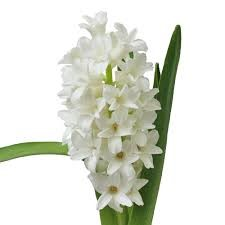 Types of white flower decide your choice floral trends diy types of white flower hyacinth mightylinksfo